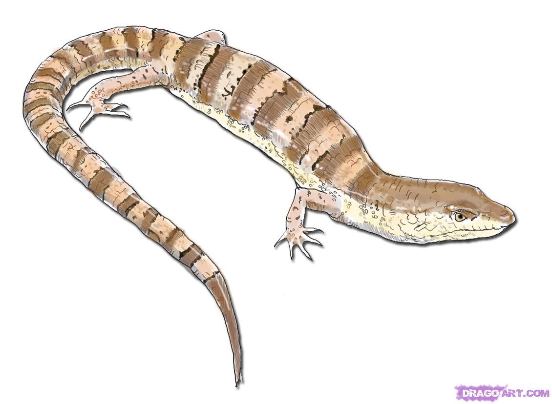 Drawn reptile cartoon Online Lizard how a Reptiles