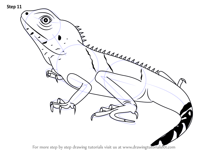 Drawn reptile chinese water dragon Learn a necessary to dragon