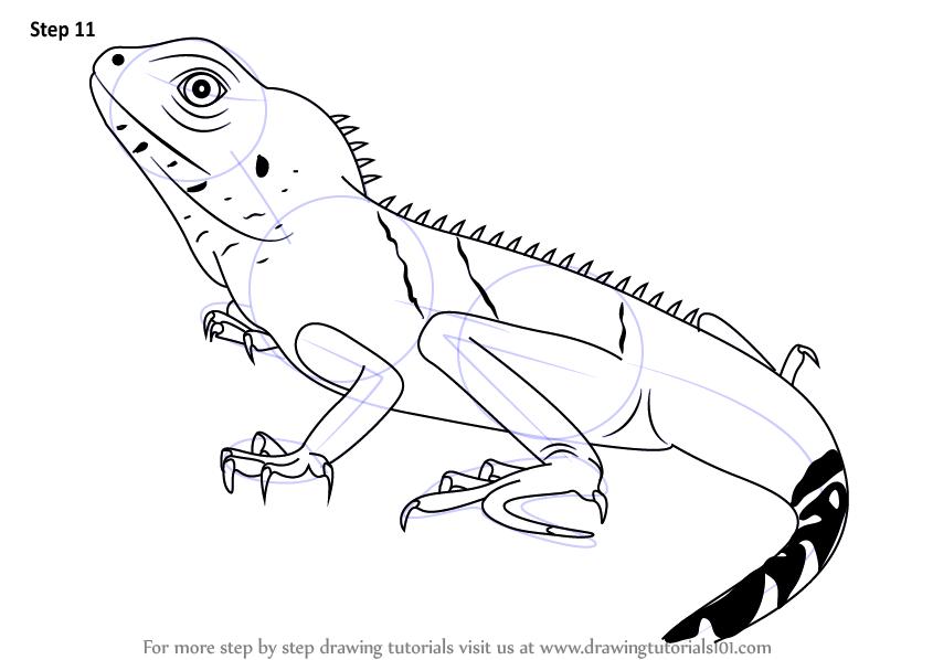 Drawn reptile chinese water dragon Draw to dragon (Reptiles) finish