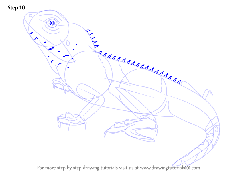 Drawn reptile chinese water dragon Learn a retinas to dragon
