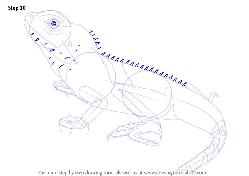 Drawn reptile chinese water dragon Draw to dragon (Reptiles) drawing