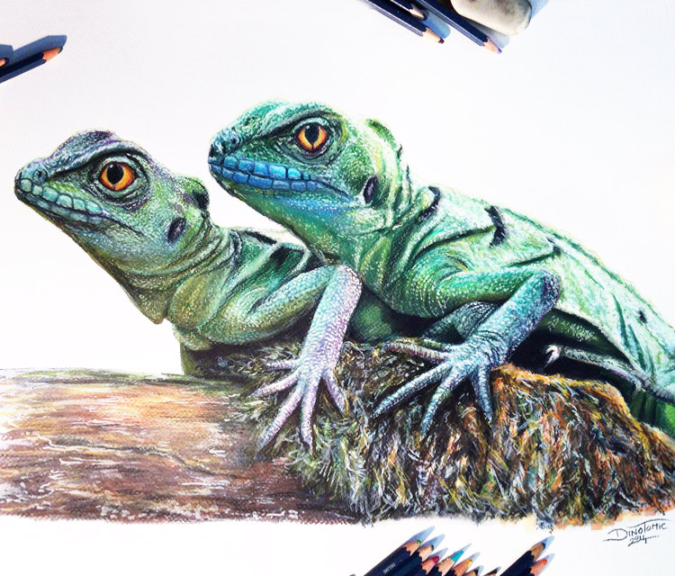 Drawn reptile chinese water dragon 611 No by dragons Tomic