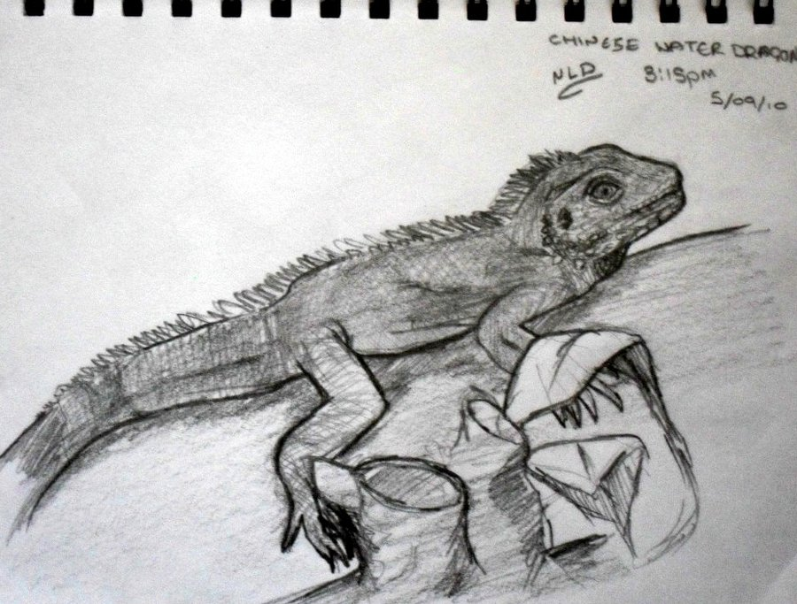 Drawn reptile chinese water dragon By Dragon Water Chinese by