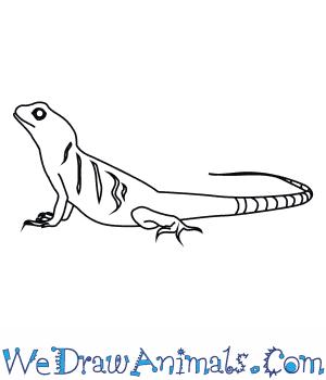 Drawn reptile chinese water dragon Dragon an to Water Draw
