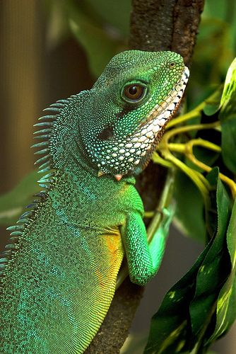 Drawn reptile chinese water dragon Images Dragons best Dragon Water
