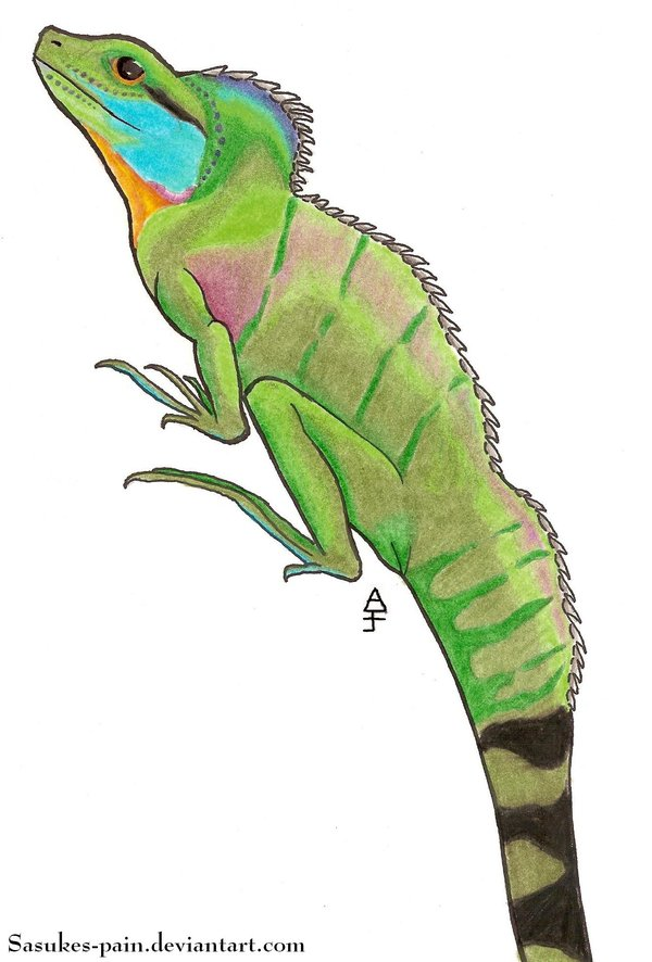 Drawn reptile chinese water dragon Pain by Water Water on