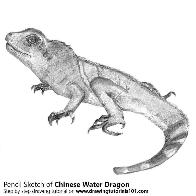 Drawn reptile chinese water dragon Dragon water Sketch Drawing Drawing