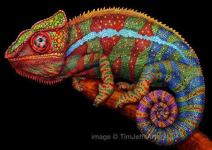 Drawn reptile colorful Jeffs of Colorful  Reptiles