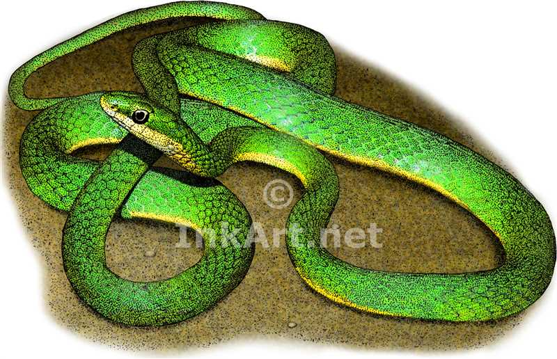 Drawn reptile colorful Art Snake stock snake Rough