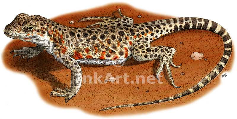 Drawn reptile colorful Lizard Nosed color leopard long