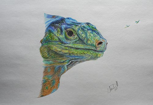 Drawn reptile colorful WetCanvas Lizard Coloured Colourful Lizard
