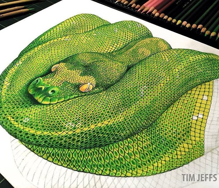"Drawn reptile colorful Tim #reptile ""Green like Moving"