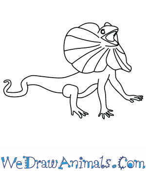 Drawn reptile eagle head front A How to Frilled Lizard