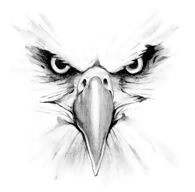 Drawn reptile eagle head front Animal Styles