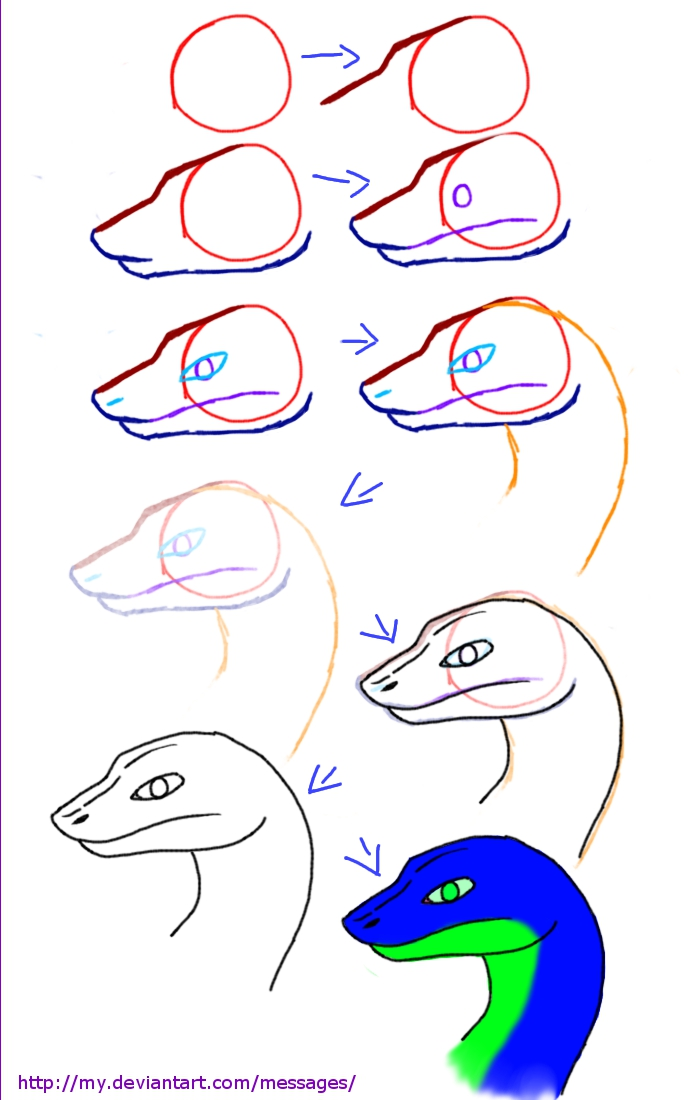 Drawn reptile eagle head front How draw  Drawing Search
