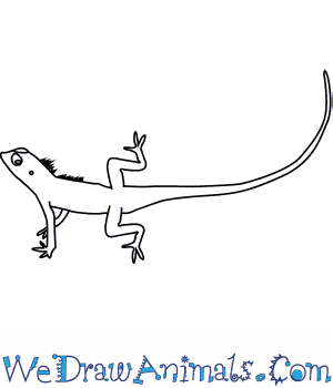 Drawn reptile easy To Draw a  How