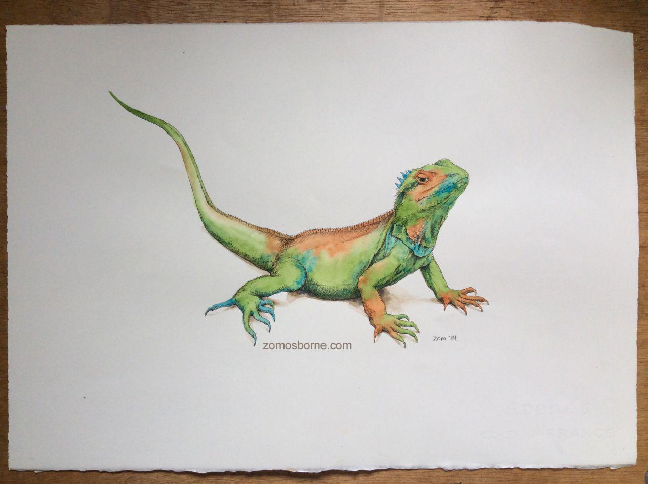 Drawn reptile garden lizard Birds water a by and