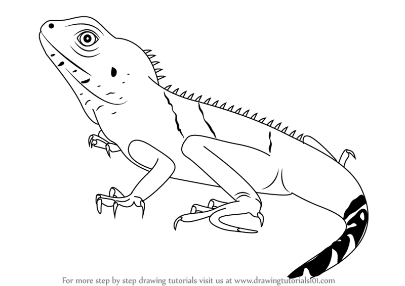 Drawn reptile garden lizard By Learn water Step Step