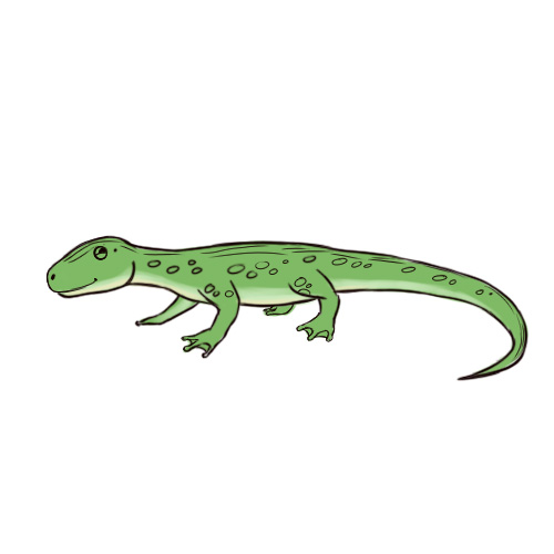 Drawn reptile garden lizard Made Lizard wikiHow Pictures) Recently