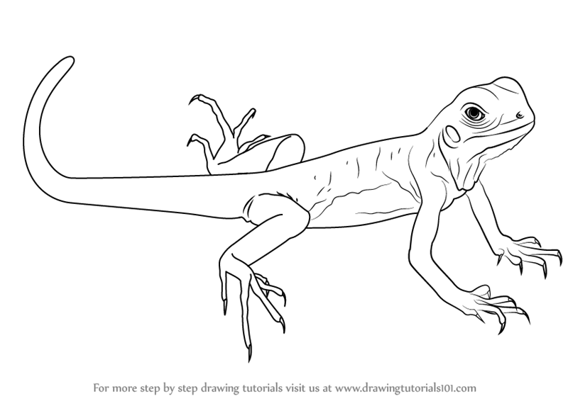 Drawn reptile garden lizard A How Learn Draw Green