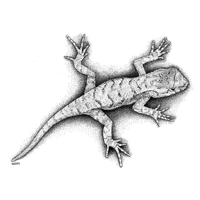 Drawn reptile garden lizard On Lizard best images Pinterest