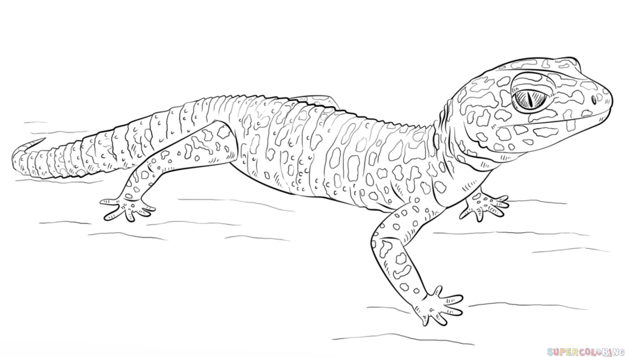 Drawn reptile gecko To How gecko Step leopard