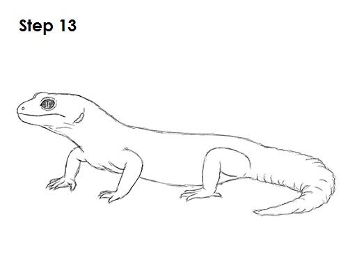 Drawn reptile gecko A Draw Lizard Gecko Gecko