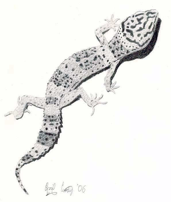Drawn reptile gecko Gecko Leopard Serpent on Cerulean