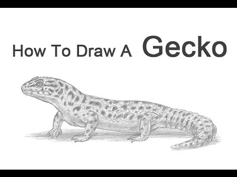 Drawn reptile gecko To How Gecko YouTube Leopard