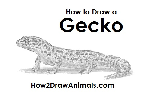 Drawn reptile gecko Gecko a Lizard Gecko Draw