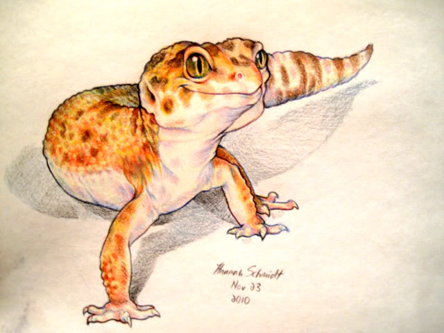Drawn reptile gecko Thinking more! like this something