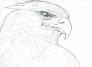 Drawn reptile golden eagle To a eagle how How