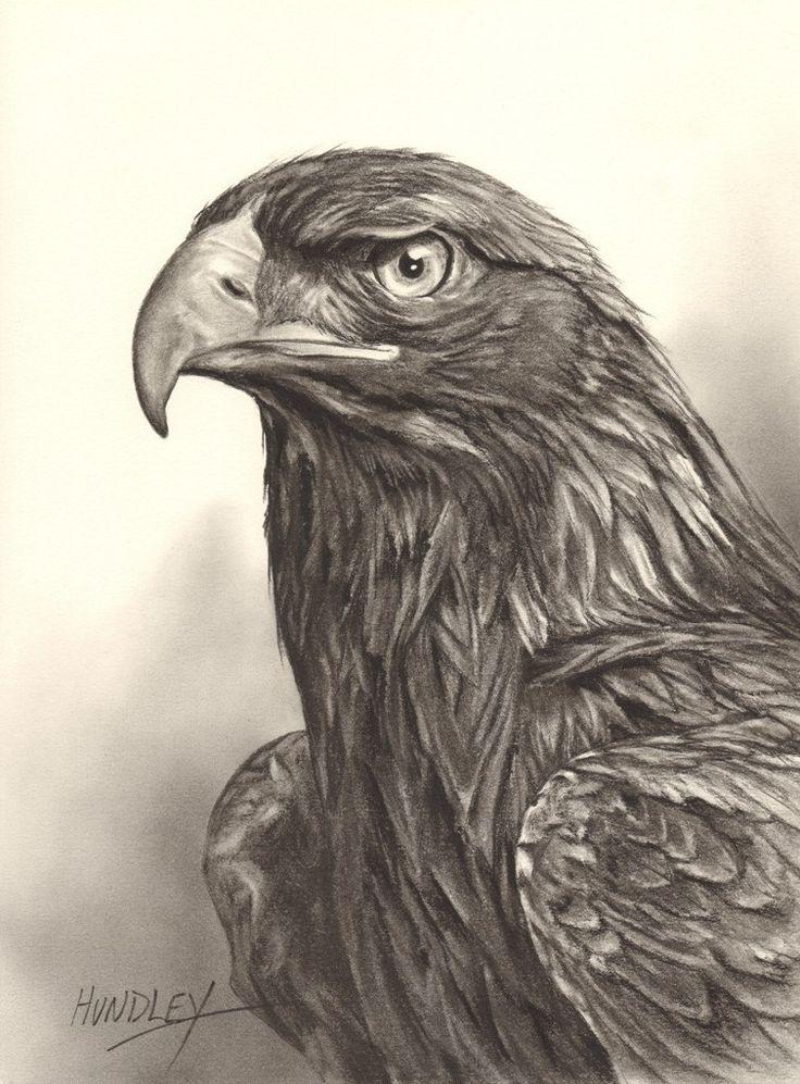 Drawn reptile golden eagle Golden Drawing Eagle