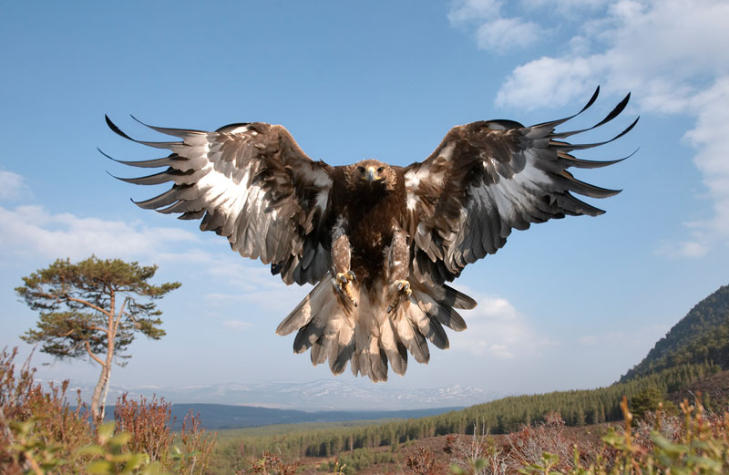 Drawn reptile golden eagle The The  Day: Eagle
