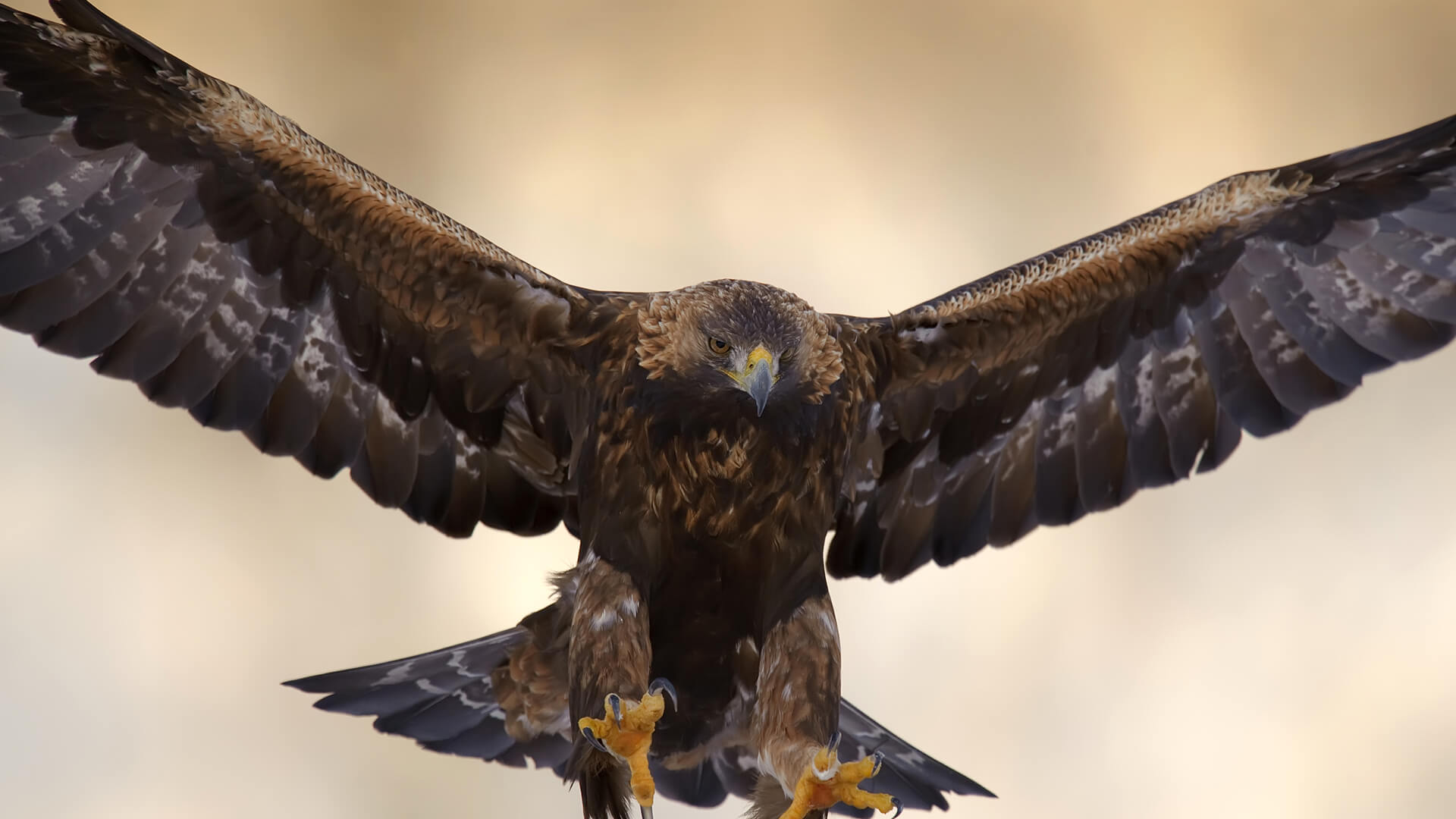 Drawn reptile golden eagle In wings and Golden goes