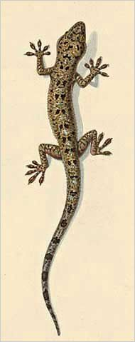 Drawn reptile house 5 Lizard com ArtsCult Pinterest