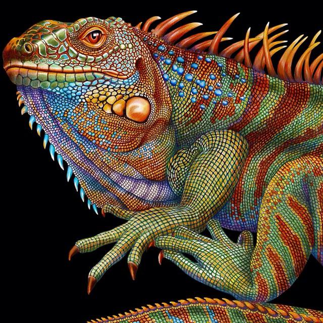 Drawn reptile iguana Finished available a iguana drawing