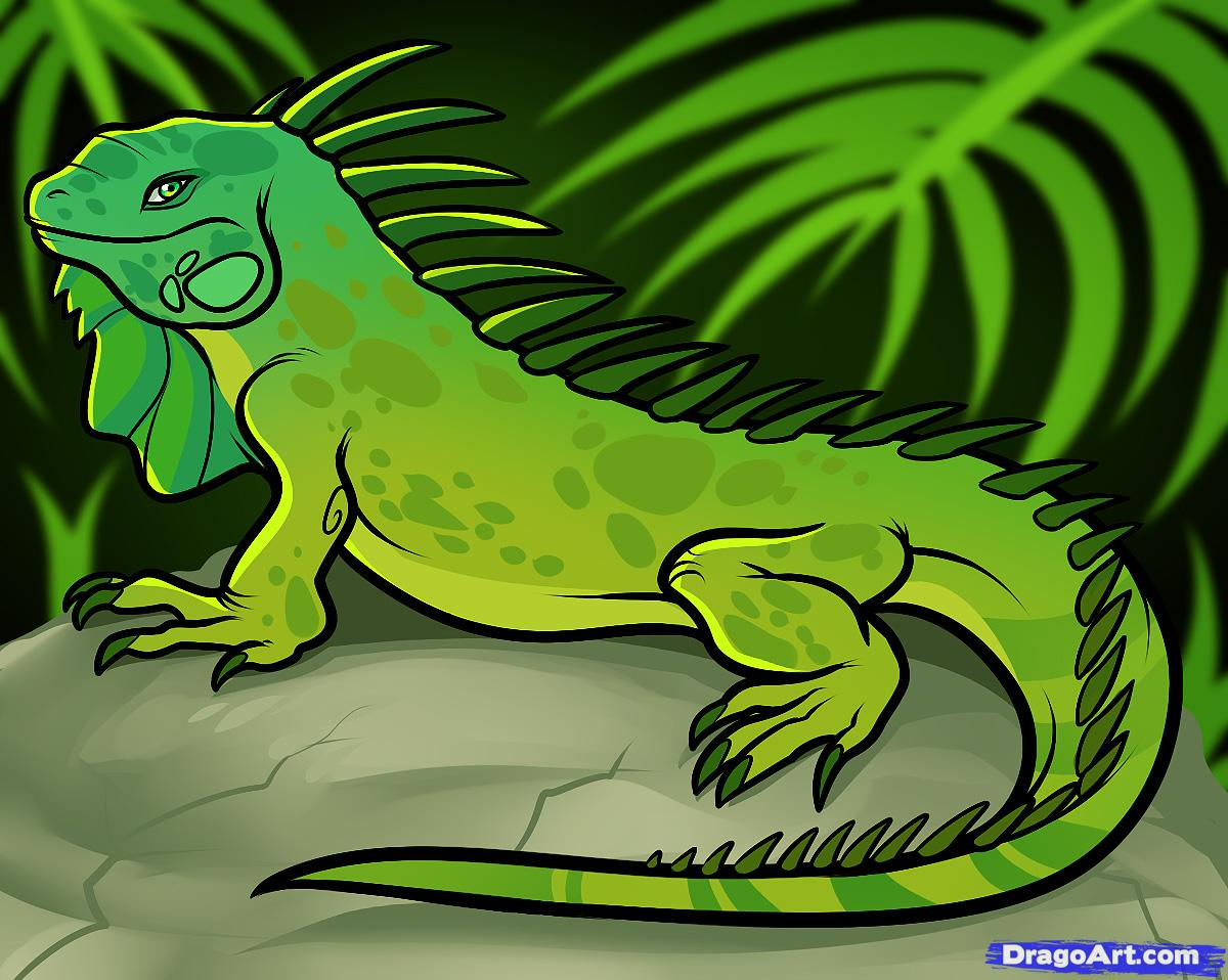 Drawn reptile iguana How Step  to FREE