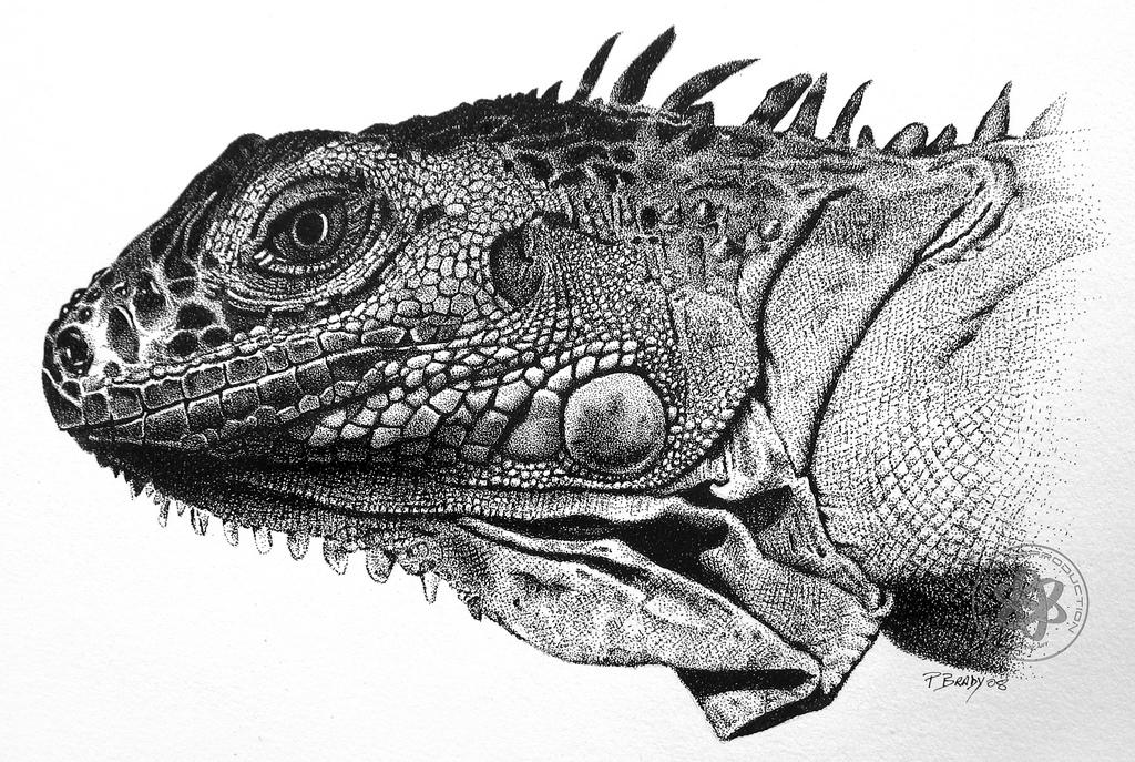 Drawn reptile iguana Pbradyart Brady by pen ink