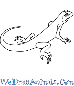 Drawn reptile line drawing To Draw a How Green