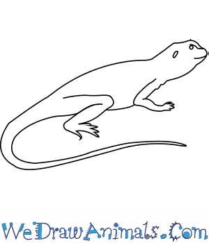 Drawn reptile line drawing To Draw a How Collared