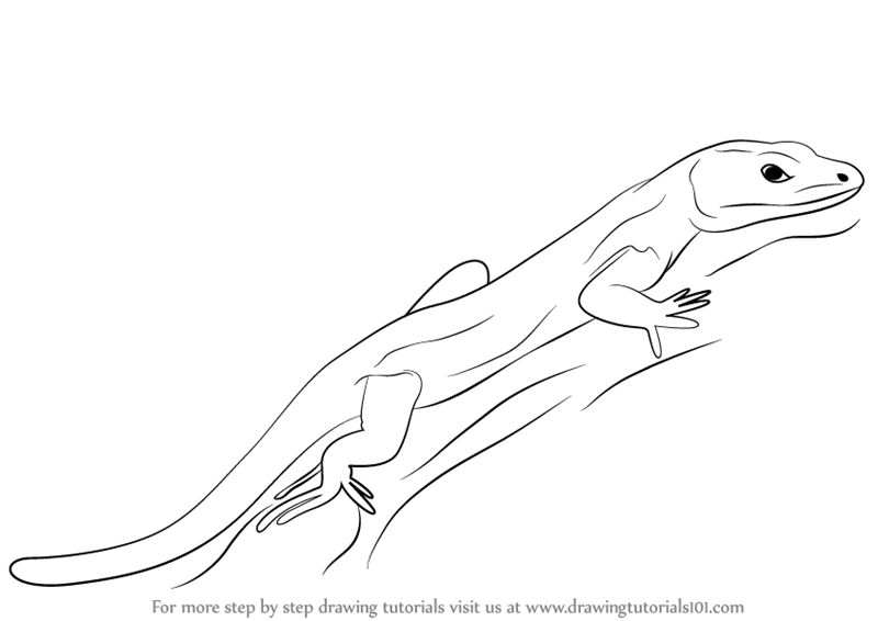 Drawn reptile line drawing Learn Bedriaga's Draw a a