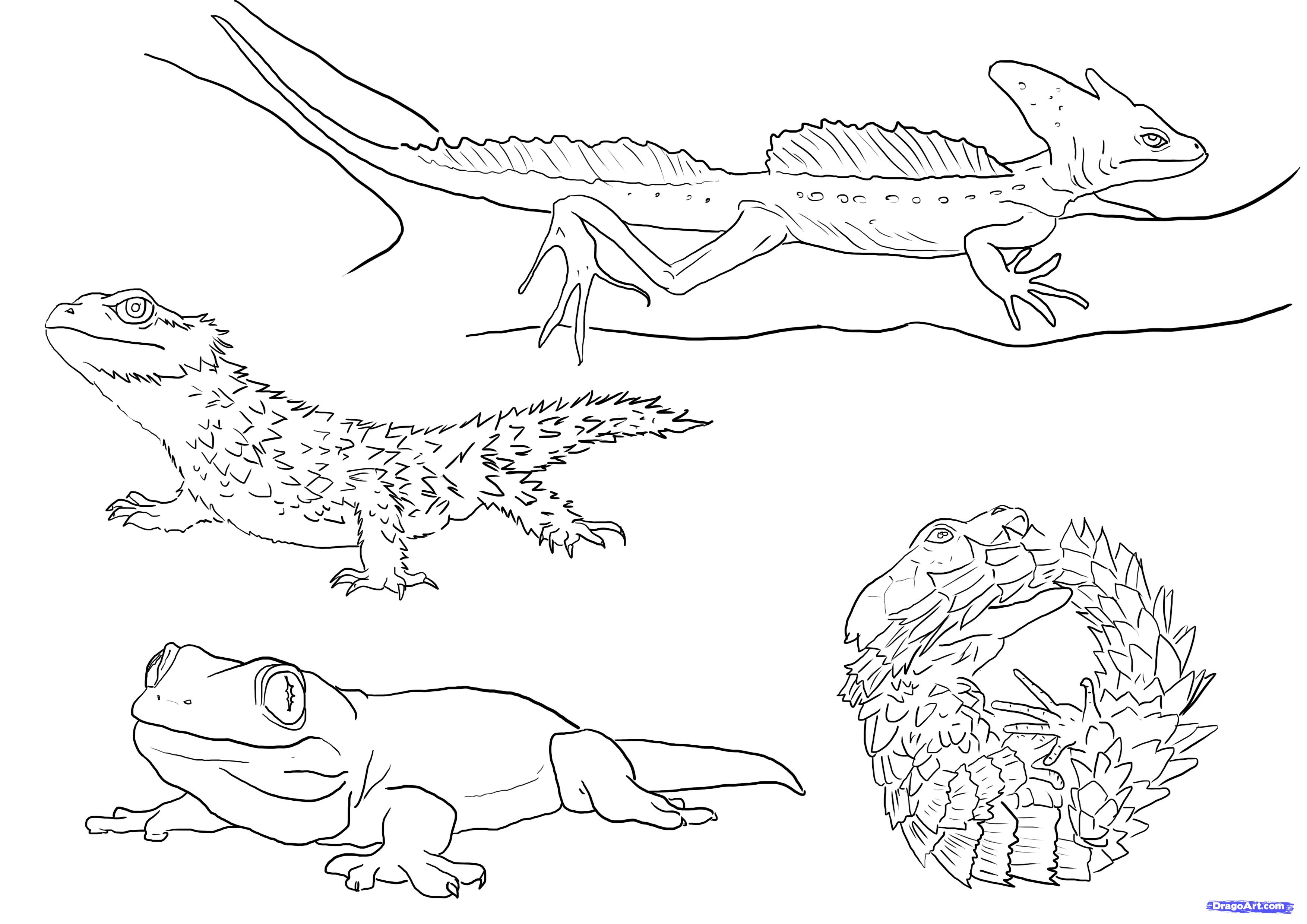 Drawn reptile line drawing To to draw photo#5 Draw