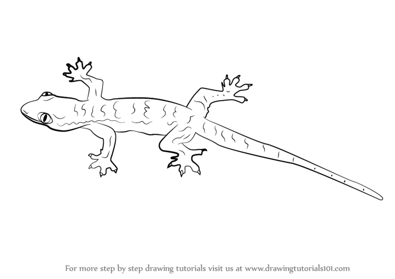 Drawn reptile line drawing To Step Draw a (Lizards)