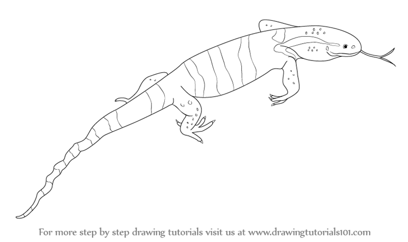Drawn reptile line drawing (Reptiles)  Drawing Step to