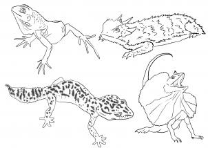 Drawn reptile lizard head Step FREE step  Animals