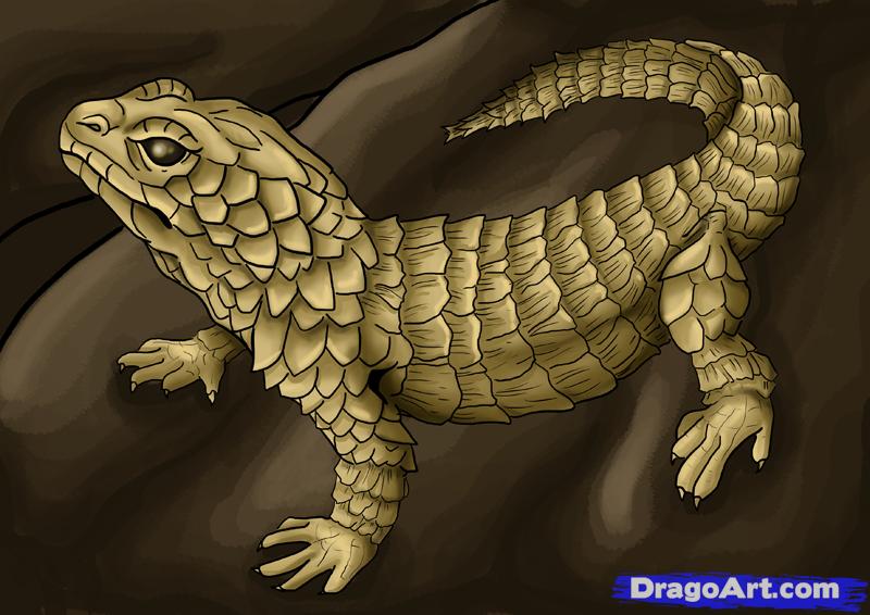 Drawn reptile lizard head Animals  How Online draw