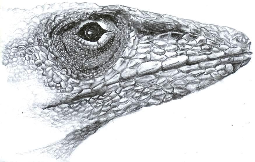 Drawn reptile lizard head Lizard by ruscy head ruscy