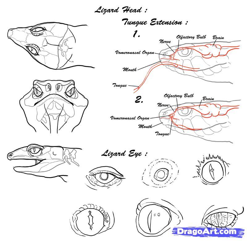 Drawn reptile lizard head II Assignment