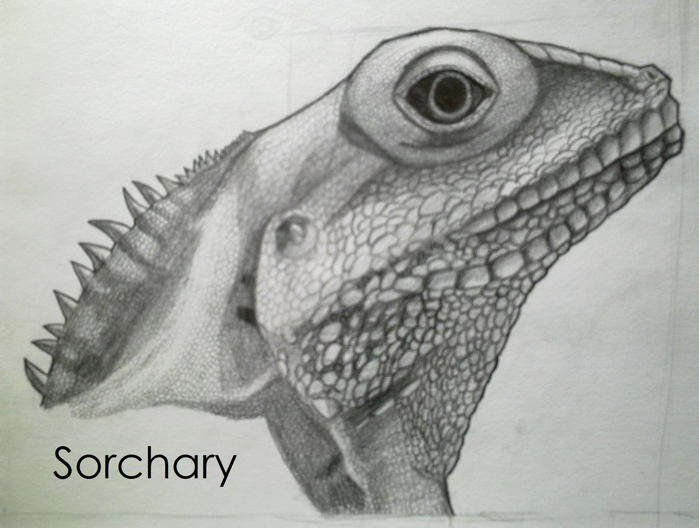 Drawn reptile lizard head On Lizard by Sorchary Head